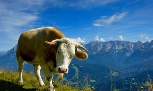 O que significa tornar-se vegano?
